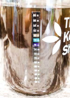 checking temperature of tea step for kombucha