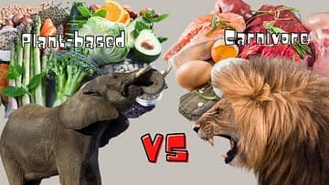 Plant-based vs Carnivore; elephant vs lion
