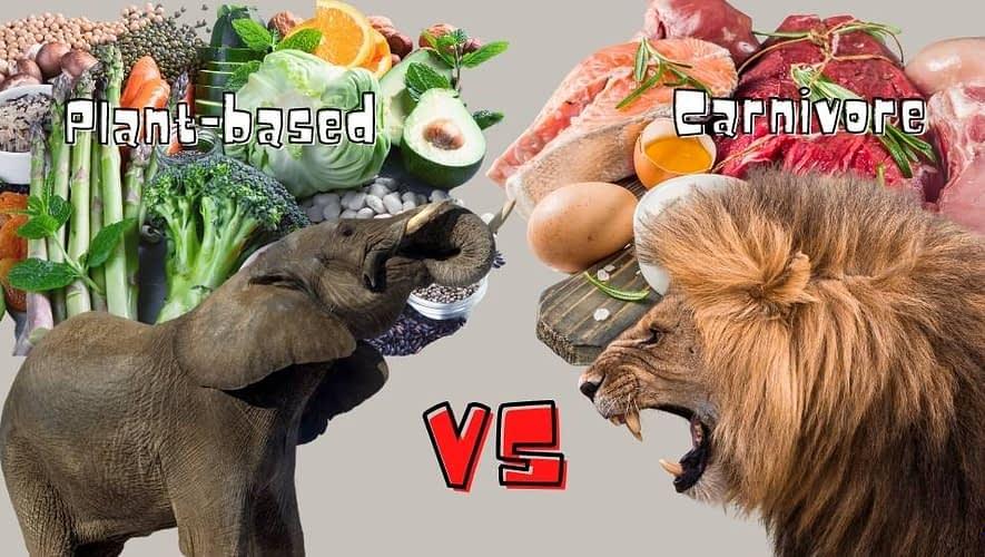 Plant-based vs Carnivore; elephant vs lion