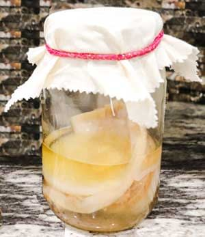 pour scoby and a cup of kombucha into jar and cover